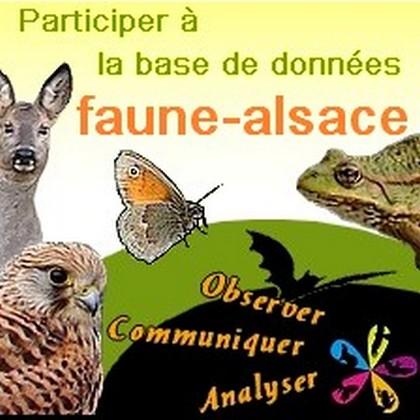 faune-alsace
